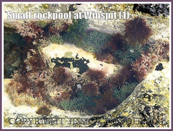 A small rockpool at Winspit, Dorset, UK - part of the Jurassic Coast (1)