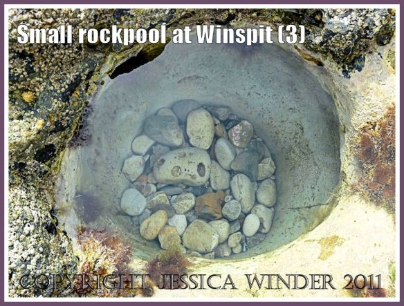 Small round rockpool with nothing but pebbles at Winspit, Dorset, UK - part of the Jurassic Coast (3)