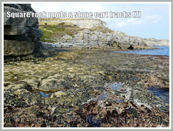 View from west to east across the rock platform at Winspit, Dorset, UK - part of the Jurassic Coast (7)
