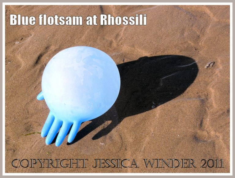 Flotsam blue rubber glove: An inflated blue rubber glove bobbing ashore on the incoming tide at Rhossil Bay, Gower, South Wales, UK (1)