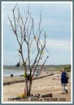 Driftwood tree decorated with flotsam on Rhossili beach, Gower, South Wales, UK, June 2009 (3)