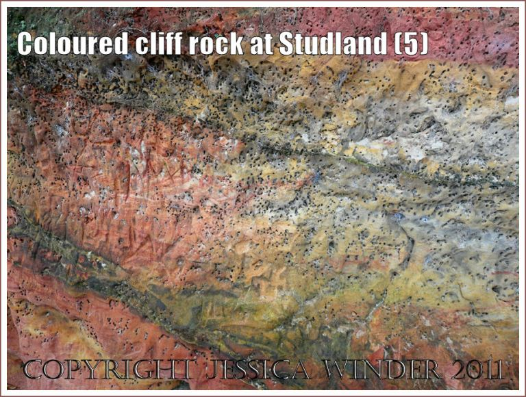 Natural rock patterns: Red and yellow strata in the cliffs at Studland Bay, Dorset, UK, on the Jurassic Coast - with burrows excavated by bees or wasps (5)