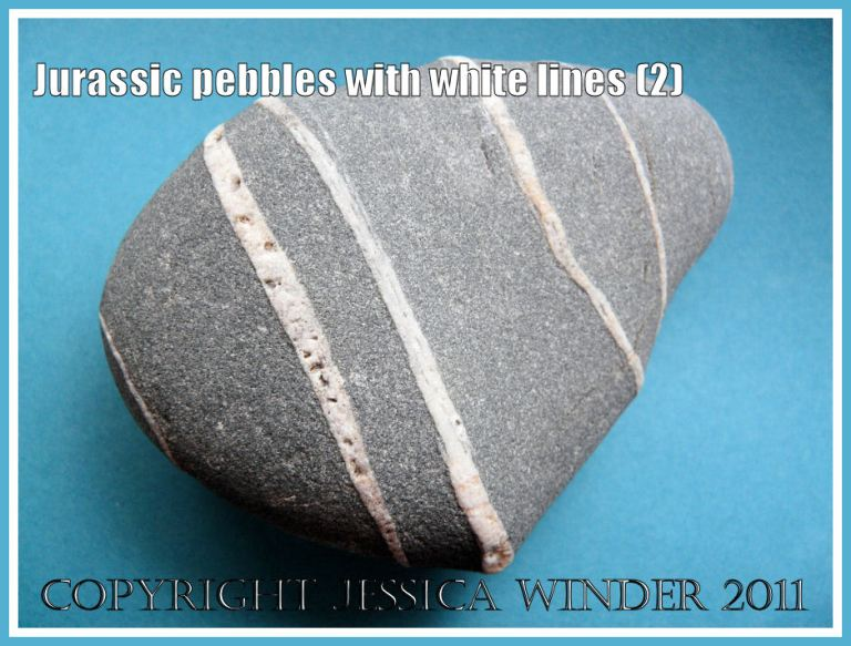 A pebble with white lines from the Jurassic Coast, Dorset, UK (2)