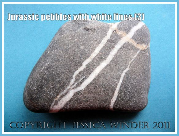 A pebble with a pattern of white lines from the Jurassic Coast, Dorset, UK (3)