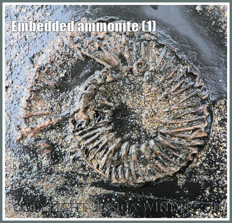 Ammonite fossil embedded in rock on the Jurassic Coast, Dorset, UK - a spiral pattern in nature (1)