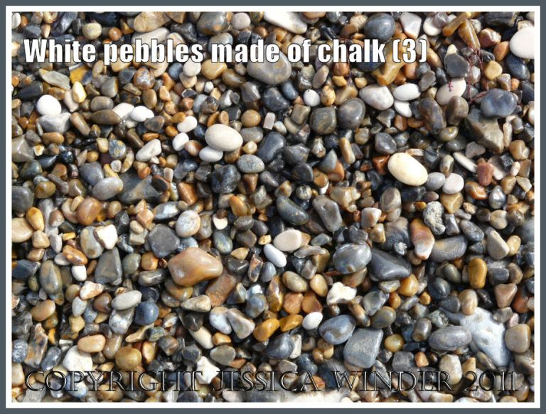 Wet pebbles of white chalk with grey flint and yellow chert on a Jurassic Coast beach (3)