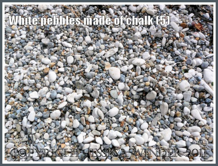 Dry pebbles of white chalk, grey flint, and yellow chert on a Jurassic Coast beach (5)