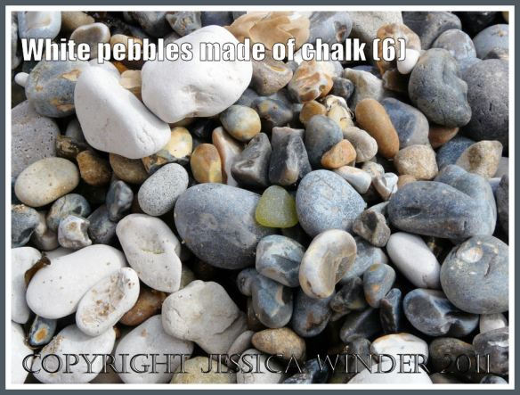 Dry pebbles of white chalk, grey flint and yellow chert on a Jurassic Coast beach (6)