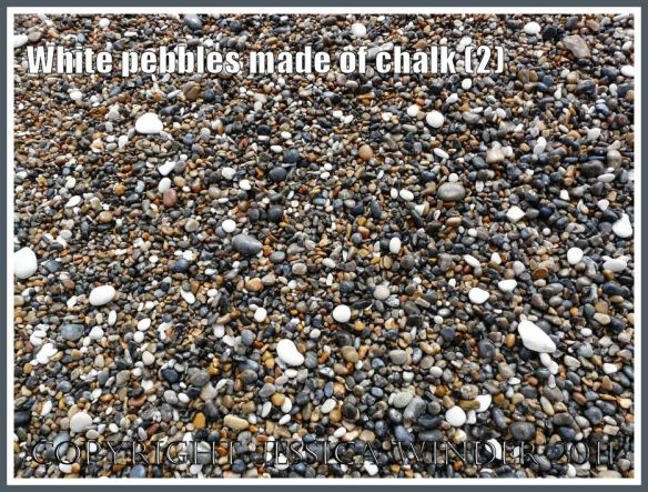 Pebbles of white chalk with grey flint and yellow chert on a Jurassic Coast seashore (2)