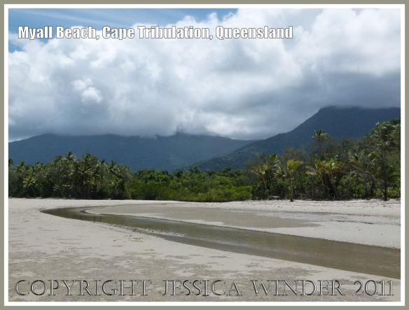 Myall Beach, Cape Tribulation, in Far North Queensland, Australia, where the empty shell of the marine Cephalopod mollusc Spirula spirula L. - Common Spirula or Ram's Horn, was found (4)