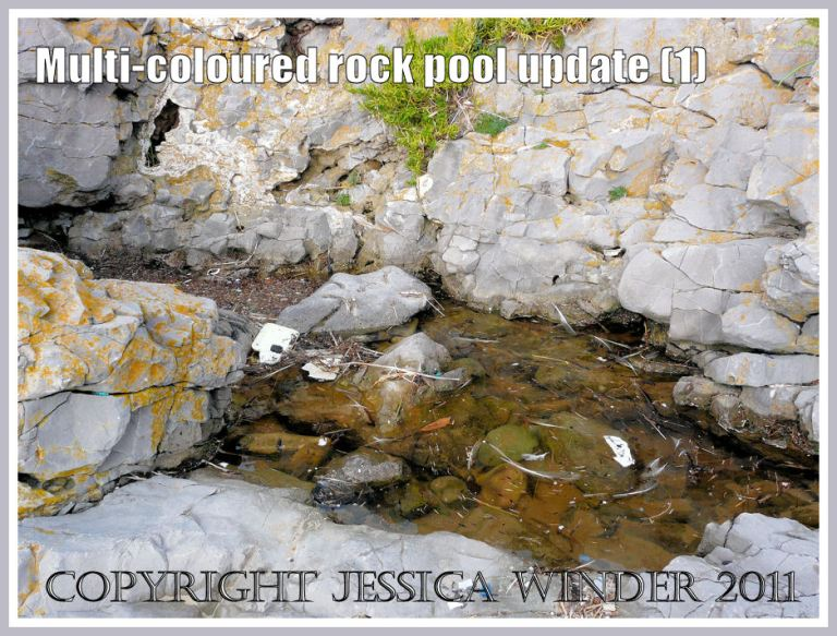 Rock pool recovering from plastic pollution in October 2009. The water is fairly clear. (1)