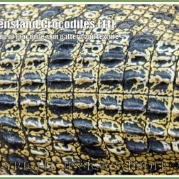 Queensland Crocodiles (11) - Close-up of the skin pattern and texture of a captive young living Saltwater Crocodile in Queensland Australia.