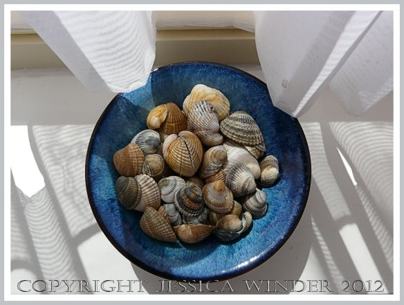 Blue bowl of cockle shells on my sunny window sill