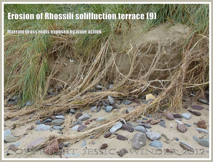 Erosion of rhossili solifluction terrace 9 jessica 39 s for Terr root word