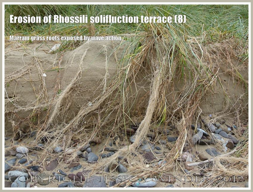 Erosion of rhossili solifluction terrace 8 jessica 39 s for Terr root word