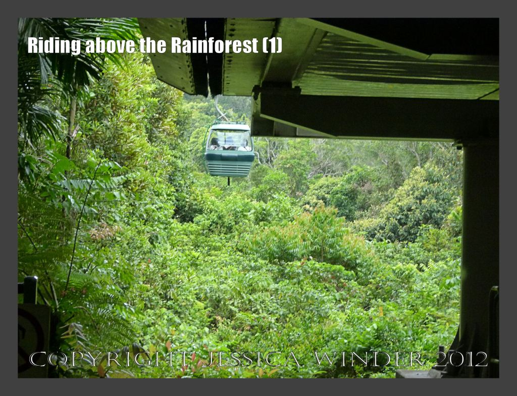 Riding above the Rainforest 1 - Looking out into the inpenetrable jungle at ground level from the Skyrail Rainforest Cableway at the Barron Falls Station, Queensland, Australia.
