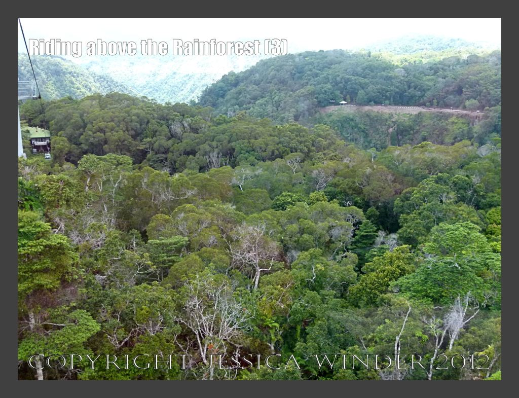 Riding above the Rainforest 3 - View from the Skyrail gondola suspended from cables high above the canopy of the rainforest in Barron Gorge National Park, Queensland, Australia.