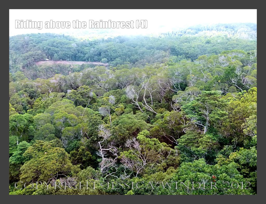 Riding above the Rainforest 4 - View from the Skyrail gondola suspended from cables high above the canopy of the rainforest in Barron Gorge National Park, Queensland, Australia.