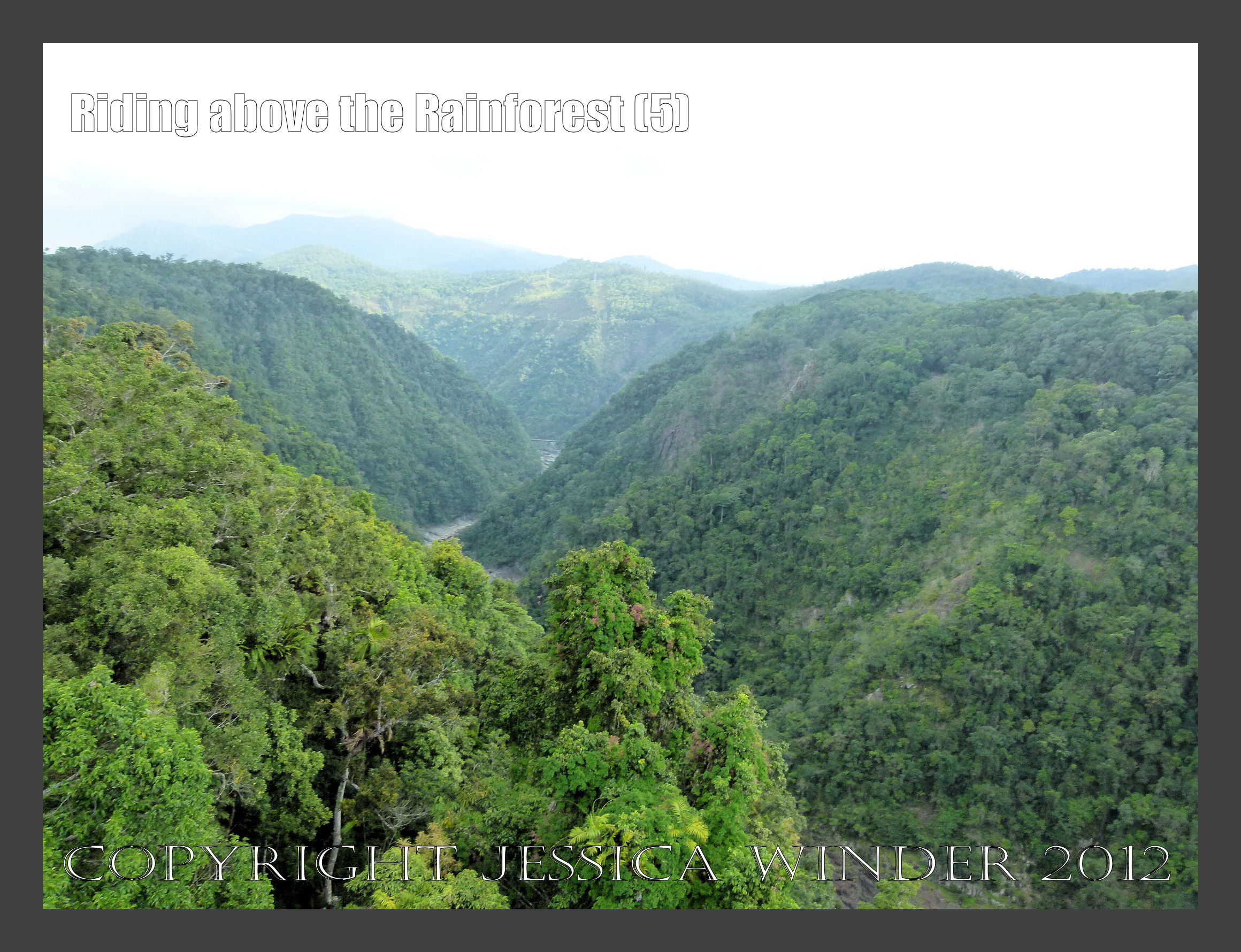 Riding above the Rainforest 5   Jessica's Nature Blog