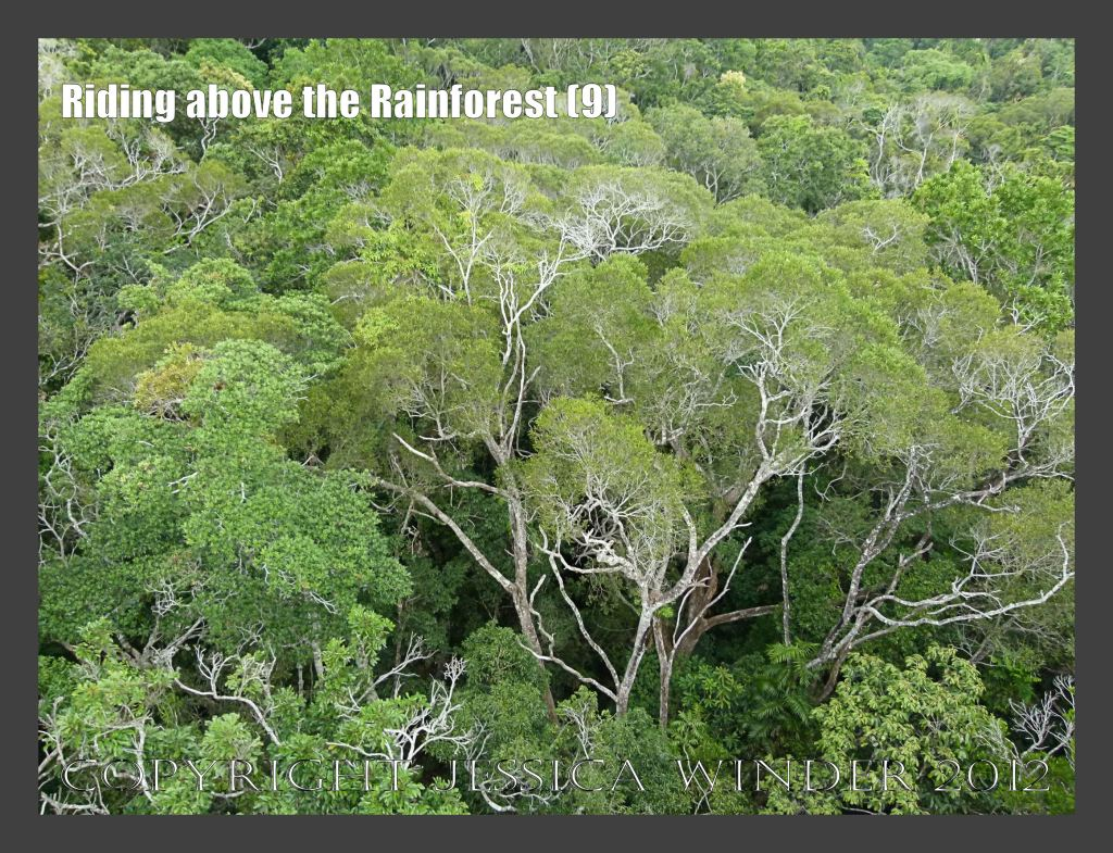Riding above the Rainforest 9 - View from the Skyrail gondola suspended from cables high above the canopy of the rainforest in Barron Gorge National Park, Queensland, Australia.