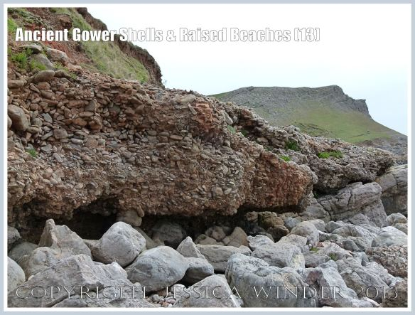 Ancient Gower Shells & Raised Beaches (13) - Over-hanging layers of ancient raised beach deposits with pebbles and marine shells, formed during an interglacial period 125,000 to 130,000 years ago, on the landward edge upper shore of the Worms Head Causeway, Gower, South Wales.