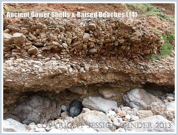 Ancient Gower Shells & Raised Beaches (14) - Over-hanging layers of ancient raised beach deposits with pebbles and marine shells, formed during an interglacial period 125,000 to 130,000 years ago, seen on the landward (Rhossili) edge of the upper shore of the Worms Head Causeway, Gower, South Wales.