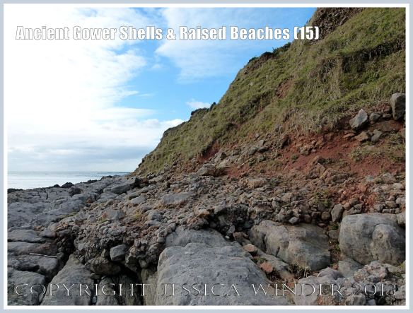 Ancient Gower Shells & Raised Beaches (15) - Layer of ancient raised beach deposits with pebbles and marine shells, formed during an interglacial period 125,000 to 130,000 years ago, forming a carpeting layer cemented to wave-cut bed-rock, seen on the landward (Rhossili) edge of the upper shore of the Worms Head Causeway, Gower, South Wales.