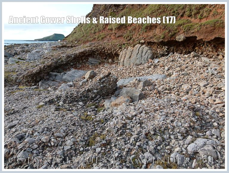 Ancient Gower Shells & Raised Beaches (17) - Layer of ancient raised beach deposits with pebbles and marine shells, formed during an interglacial period 125,000 to 130,000 years ago, forming a carpeting layer cemented to wave-cut bed-rock. Another layer can be seen overlying it and extending seawards, while the vertical section of raised beach deposits, solifluction debris, and red soil derived from Old Red Devonian sandstone is visible  in background - with the lowest layer undercut and overhanging the beach. Photographed on the landward (Rhossili) edge of the upper shore of the Worms Head Causeway, Gower, South Wales.