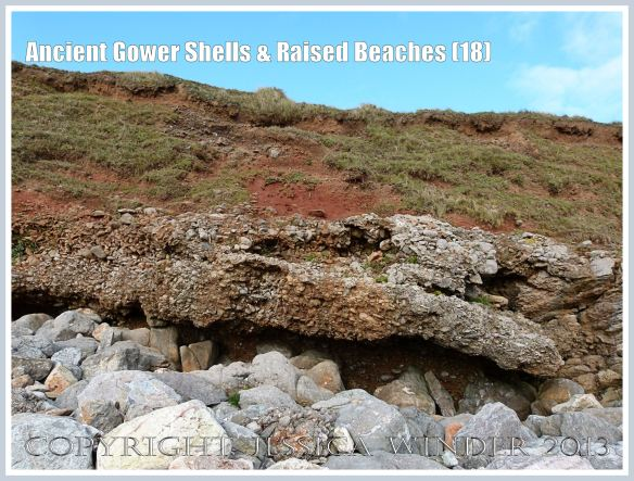 Ancient Gower Shells & Raised Beaches (18) - Over-lapping and protruding layers of ancient raised beach deposits with pebbles and marine shells, formed during an interglacial period 125,000 to 130,000 years ago, with solifluction debris, and red soil derived from Old Red Devonian sandstone also visible, with the lowest layer undercut by high tide wave action and overhanging Carboniferous Limestone bed-rock below. Photographed on the Rhossili Headland edge of the Worms Head Causeway, Gower, South Wales.