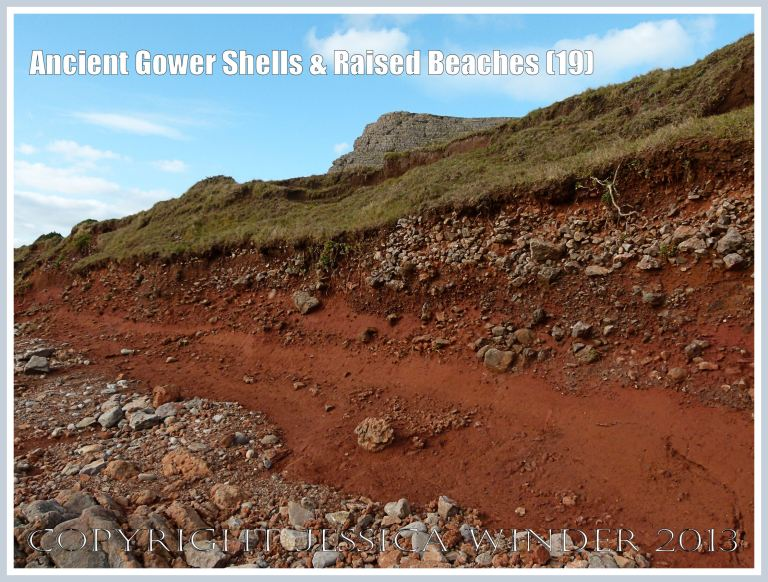Ancient Gower Shells & Raised Beaches (19) - Deep red soil (derived from Old Red Devonian rocks) obscuring the raised beach deposits at the base of the Rhossili Headland, adjacent to the Worms Head Causeway, Gower, South Wales.