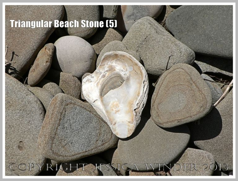 Triangular Beach Stone (5) - Natural triangular shape of two pebbles or beach stones with an oyster shell on the beach.
