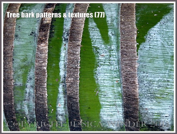 Tree bark patterns & textures (77) - Natural patterns, colours and textures of bark on various types of Palm trees in Queensland, Australia. Examples of natural abstract art.