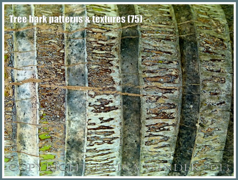 Tree bark patterns & textures (75) - Natural patterns, colours and textures of bark on various types of Palm trees in Queensland, Australia. Examples of natural abstract art.