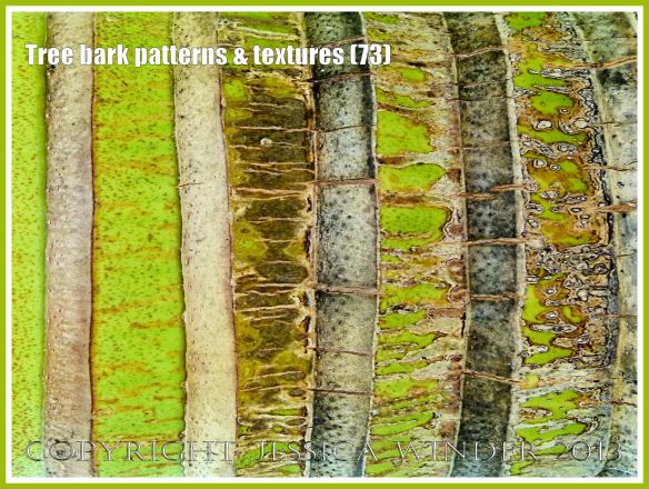 Tree bark patterns & textures (73) - Natural patterns, colours and textures of bark on various types of Palm trees in Queensland, Australia. Examples of natural abstract art.