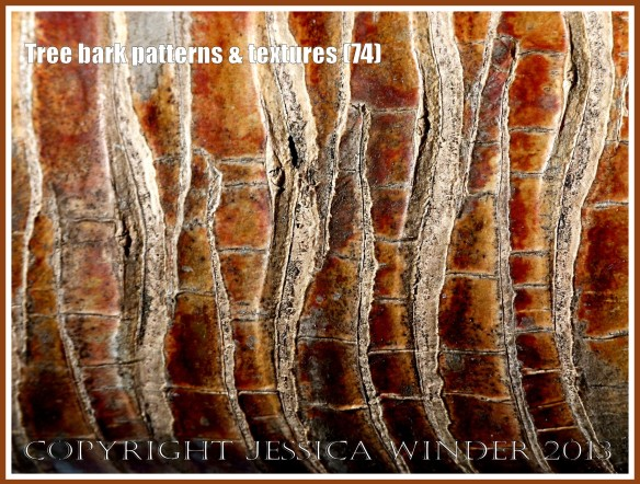 Tree bark patterns & textures (74) - Natural patterns, colours and textures of bark on various types of Palm trees in Queensland, Australia. Examples of natural abstract art.