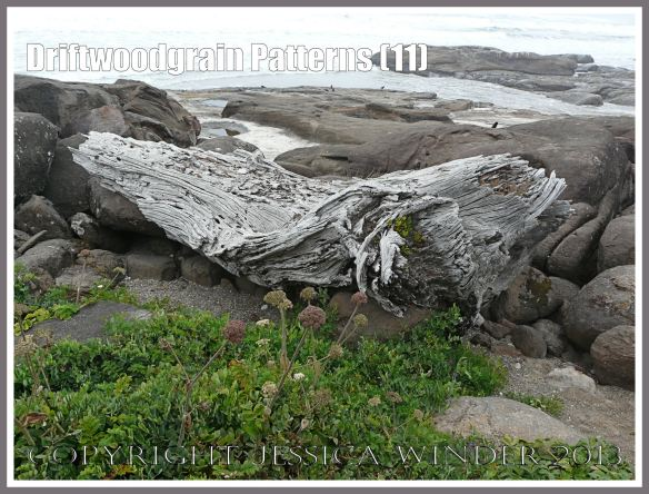 Driftwoodgrain Patterns (11) - Large tree trunk driftwood washed up on a basalt covered beach in Oregon.