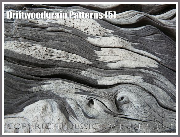 Driftwoodgrain Patterns (5) - Natural patterns of swirls and grooves in weathered driftwood, with patches of black and white lichen encrustation, washed up on an Oregon Coast beach.