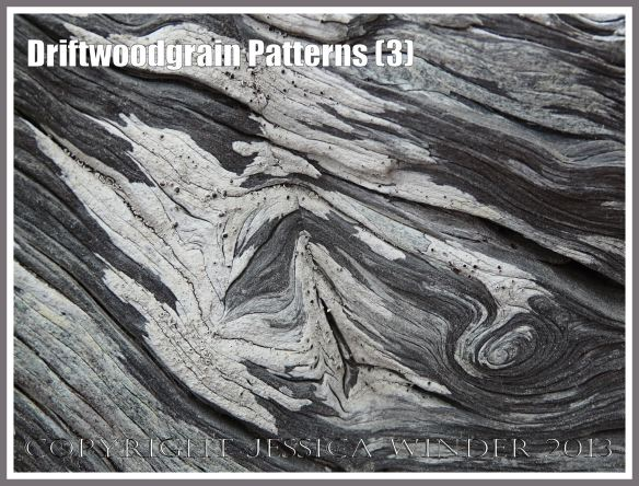 Driftwoodgrain Patterns (3) - Natural patterns in weathered driftwood washed up on an Oregon Coast beach - with encrusting black and white lichen.