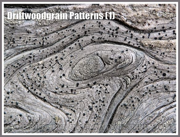 Driftwoodgrain Patterns (1) - Natural patterns in weathered driftwood washed up on an Oregon coast beach. The small black dots are lichen.