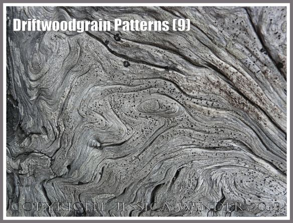 Driftwoodgrain Patterns (9) - Wood texture - natural patterns of swirls and grooves in weathered driftwood washed up on an Oregon Coast beach.