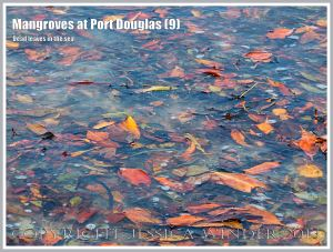 Mangroves at Port Douglas (9) - Brightly coloured dead mangrove leaves that fall throughout the year from the mangrove trees on the waters' edge at Port Douglas, Queensland, Australia.