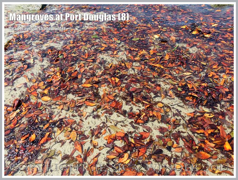 Mangroves at Port Douglas (8) - Brightly coloured dead mangrove leaves that fall throughout the year from the mangrove trees on the waters' edge at Port Douglas, Queensland, Australia.