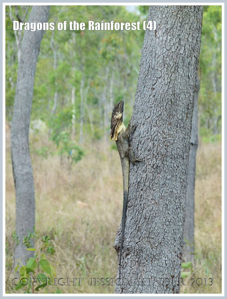 Dragons of the Rainforest (4)