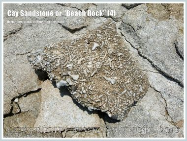"Cay Sandstone or ""Beach Rock"" (4) - Broken slab of coral fragments cemented together in Cay Sandstone or ""Beach Rock"" on Normanby Island, one of the Frankland Islands, Queensland, Australia."