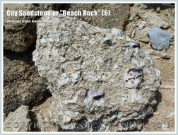 """Cay Sandstone or """"Beach Rock"""" (6) - Broken slab of coral fragments and shells cemented together in Cay Sandstone or """"Beach Rock"""" on Normanby Island, one of the Frankland Islands, Queensland, Australia."""