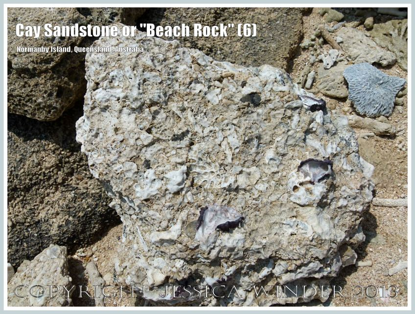"Cay Sandstone or ""Beach Rock"" (6) - Broken slab of coral fragments and shells cemented together in Cay Sandstone or ""Beach Rock"" on Normanby Island, one of the Frankland Islands, Queensland, Australia."