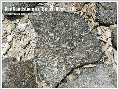 "Cay Sandstone or ""Beach Rock"" (10) - Broken slab of coral fragments cemented together in Cay Sandstone or ""Beach Rock"" on Normanby Island, one of the Frankland Islands, Queensland, Australia."