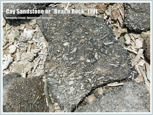 """Cay Sandstone or """"Beach Rock"""" (10) - Broken slab of coral fragments cemented together in Cay Sandstone or """"Beach Rock"""" on Normanby Island, one of the Frankland Islands, Queensland, Australia."""