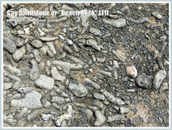 """Cay Sandstone or """"Beach Rock"""" (11) - Close-up of the coral fragments cemented together in a broken slab of Cay Sandstone or """"Beach Rock"""" on Normanby Island, one of the Frankland Islands, Queensland, Australia."""