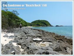 """Cay Sandstone or """"Beach Rock"""" (14) - Eroded surface of massive form of """"Beach Rock"""" on the shore at Normanby Island, one of the Frankland Islands group, Queensland, Australia."""